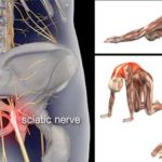 10 Piriformis Stretches To Relieve Hip, Sciatica And Lower Back Pain