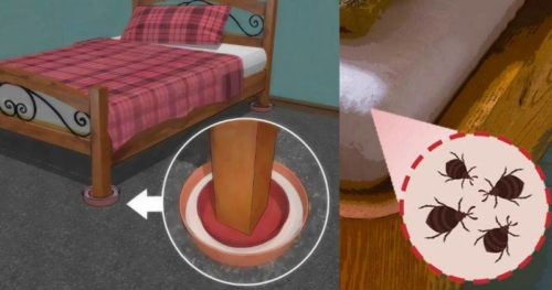 12 Ways To Naturally Get Rid Of Bed Bugs For Good