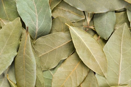 How To Treat Diarrhea, Cough, And Improve Digestion With Bay Leaves