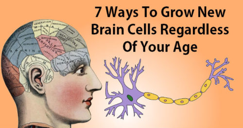 How To Grow New Brain Cells Regardless Of Your Age