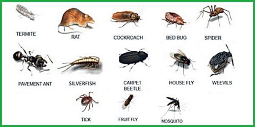 21 Natural Ways To Kill All Bugs And Mice Without Using Harmful Chemicals