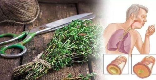 16 Herbs That Will Clear The Mucus From Your Lungs And Eliminate Any Infection