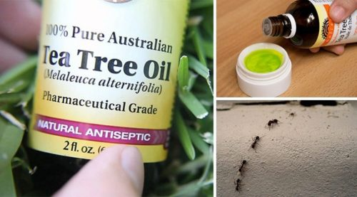 Tea Tree Oil Uses That Most People Know Nothing About