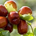 The World's #1 Fruit: 15 Reasons Why Dates Are Considered A Super-Food