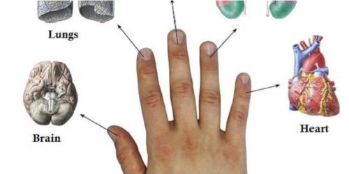 Japanese Method For Curing Your Body – Every Finger Is Related To Two Organs