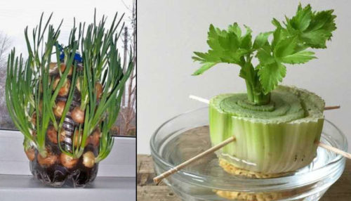 25 Plants You Can Easily Regrow At Home