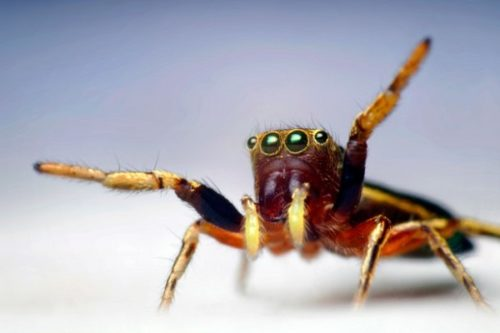 Study: The Spiders Could Theoretically Eat The Entire Human Race Within A Year If They Got Organized