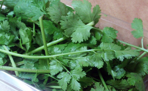 How To Eliminate Toxic Metals From Your Body With Cilantro Within Half A Month