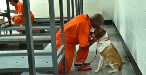 Prisoners Share Their Cells With A Dog And The Effect Is Magical