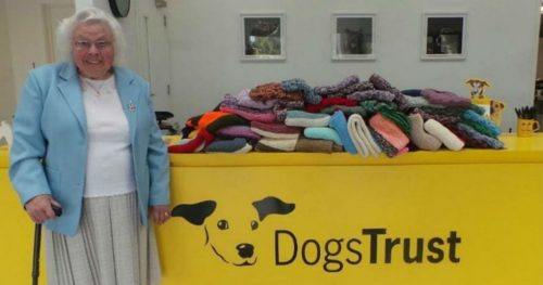 This Old Granny Knitted 450 Coats And Blankets For Shelter Dogs