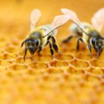 Bee – Most Important Living Being On Planet