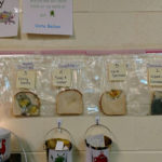 Awesome School's Science Experiment To Learn About Germs By Using Moldy Bread