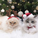 """Adorable Hack: Because Of Tangerine """"Force Field"""" Cat Won't Destroy Christmas Tree"""