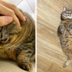 Manggo: This Chunky Cat Will Steal Your Heart With Her Hilarious Expressions