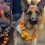 A Festival In Nepal Celebrates Dogs As Men's Best Friend