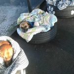 Bus Station Shelters Stray Dogs From The Cold