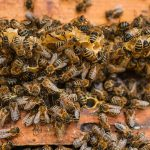 France Ban The Use Of All 5 Neonicotinoids Pesticides Killing Bees