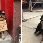 "Meet The ""Dog With Sign"" – A Cute Puppy With A Protest Signs"