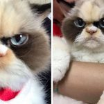 Meow Meow: The Cat That Looks Even Angrier Than Her Late Predecessor