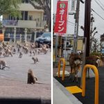 Animals Move Freely Across The Cities As People Quarantine Themselves At Home