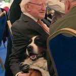 The Bernese Mountain Dog Of The Irish President Interrupts Press Conference In Need Of Belly Rubs