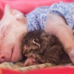 Rescued Kitten And Piglet Spend Their Time Living Together As Best Friends