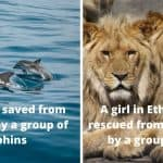 Dolphins and Lions