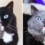 A Cat With A Two-Colored Face Got Kittens In Both His Colors